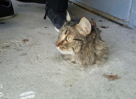Кот и бетон воронеж фибробетон
