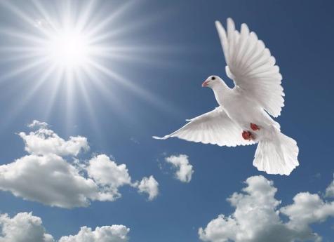 Школьники Бердска запустили внебо бумажных голубей сименами родных