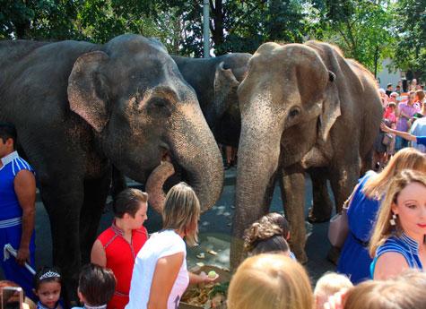 Слонов Варшавского цирка бесплатно покажут впарках Челябинска